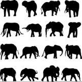 L'elefante della foresta sta vivendo in una foresta pluviale Fotografia Stock