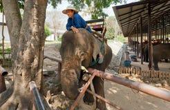 L'elefante ed il mahout si divertono in villaggio per gli animali fotografie stock