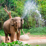 L'elefante fa lo spruzzo d'acqua - doccia della natura Fotografia Stock Libera da Diritti