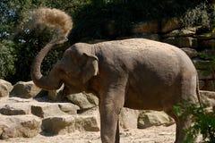 L'elefante getta la sabbia Fotografia Stock Libera da Diritti