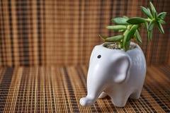 L'elefante ha modellato il vaso in porcellana bianca luminosa con la pianta succulente ed il fondo di legno immagini stock