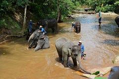 L'elefante prende un bagno Immagine Stock Libera da Diritti