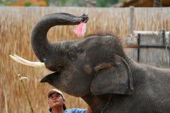 L'elefante pronto a giocare il grande dardo Fotografia Stock Libera da Diritti