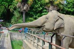 L'elefante raggiunge i bambini allo zoo Fotografia Stock