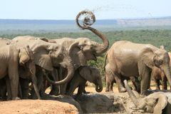 L'elefante spruzza la spirale di Dreamstime Fotografia Stock