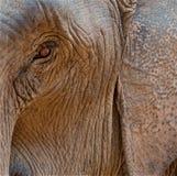 L'elefante wathing voi Fotografia Stock