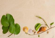 L'elemento della spiaggia immagine stock