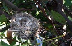 L'emboîtement de l'oiseau Images libres de droits