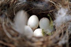L'emboîtement de l'oiseau Photographie stock libre de droits