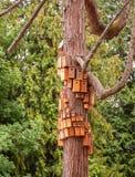 L'emboîtement a enfermé dans une boîte serré sur le corps d'arbre de cèdre Ville des volières sur le tronc d'arbre image libre de droits