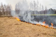 L'emergenza in un campo, fuoco brucia l'erba asciutta con gli animali fotografia stock