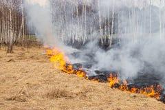 L'emergenza in un campo, fuoco brucia l'erba asciutta con gli animali immagini stock