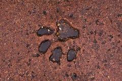 L'empreinte de pas de grand chat Photographie stock libre de droits