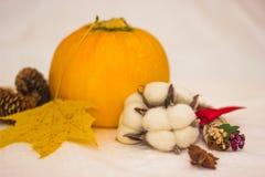 l'Encore-vie avec les cônes oranges de courgette et la feuille d'érable jaune Images stock