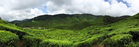 L'endroit où les amants de thé apprécie Photos stock