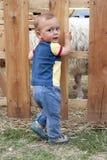 L'enfant aux moutons cultivent ou choient le zoo image stock