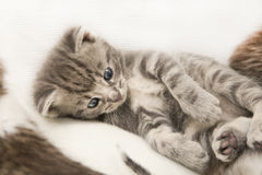 L'enfant de chats se trouve sur une couverture Image stock