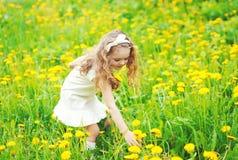 L'enfant de petite fille dans le pré sélectionnant le pissenlit jaune fleurit Images stock