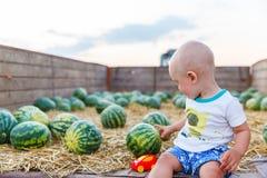 L'enfant drôle s'assied dans un chariot de tracteur avec des pastèques Photo stock