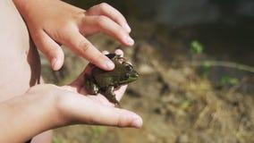 L'enfant frotte une grenouille verte dans sa main clips vidéos