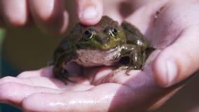 L'enfant frotte une grenouille verte dans sa main banque de vidéos
