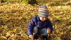 L'enfant goûte les feuilles jaunes d'automne en parc d'automne banque de vidéos