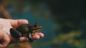 L'enfant jouant avec la grenouille verte dans sa main Mouvement lent banque de vidéos