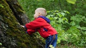 L'enfant marchant en parc d'automne Un garçon se tient près d'un grand arbre couvert de la mousse Photos libres de droits