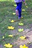 L'enfant marche les feuilles Laisser l'automne image stock