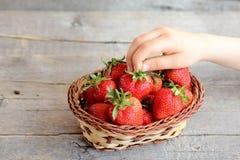 L'enfant prend une fraise du panier Le petit enfant juge une fraise mûre disponible Badine la nourriture naturelle Fraises juteus Photo libre de droits