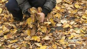 L'enfant rassemble votre feuillage jaune d'automne de mains banque de vidéos
