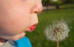 L'enfant souffle des graines de pissenlit Image stock