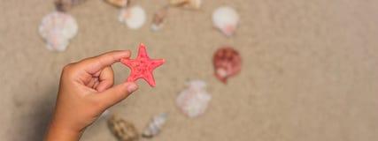 L'enfant tient les étoiles de mer rouges Interpréteurs de commandes interactifs de mer sur la plage sablonneuse Dos d'été Photos stock