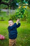 L'enfant veut sélectionner Apple vert non mûr photos stock