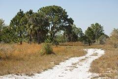 L'enroulement de sentier de randonnée par la Floride frottent au pair de Kissimmee de lac Image libre de droits
