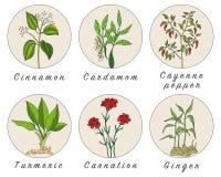 L'ensemble d'épices, d'herbes et d'officinale plante des icônes Centrales curatives illustration libre de droits