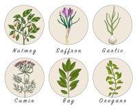 L'ensemble d'épices, d'herbes et d'officinale plante des icônes Centrales curatives illustration de vecteur