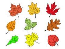 L'ensemble d'arbre part de la silhouette colorée Image libre de droits