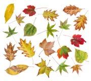 L'ensemble d'automne a coloré des feuilles du parc d'isolement sur le blanc Photos libres de droits