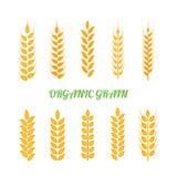 L'ensemble d'icônes simples d'oreilles de blés et le blé conçoivent des éléments pour la bière, nourriture fraîche de ferme local Photos libres de droits