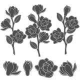 L'ensemble d'illustrations noires et blanches avec la magnolia fleurissante s'embranche Objets d'isolement de vecteur Photographie stock