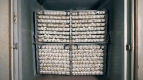 L'ensemble d'oeufs rassemblés a maintenu dans une ferme de batterie clips vidéos