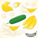 L'ensemble de banane dans divers styles dirigent le format Photo stock