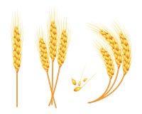 L'ensemble de blé de vecteur dans 3d a isolé le fond blanc avec l'addition de graine Vecteur Image stock
