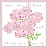 L'ensemble de cartes avec des mots vous aiment et vous remercient, fleurs pourpres confortables sur le fond Photo stock