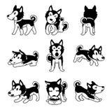 L'ensemble de chien de chien de traîneau sibérien de personnage de dessin animé de vecteur pose illustration de vecteur