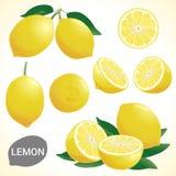 L'ensemble de citron dans divers styles dirigent le format Photographie stock libre de droits