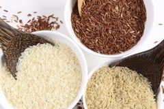 L'ensemble de collection de riz de jasmin ont les hydrates de carbone, la vitamine et le minerai ce bon pour la santé sur le fond images stock