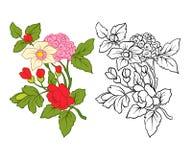 L'ensemble de contour et de vintage coloré fleurit le bouquet ou le modèle Images libres de droits