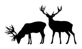 L'ensemble de deux cerfs communs debout dirigent les silhouettes noires d'isolement sur le wh illustration libre de droits